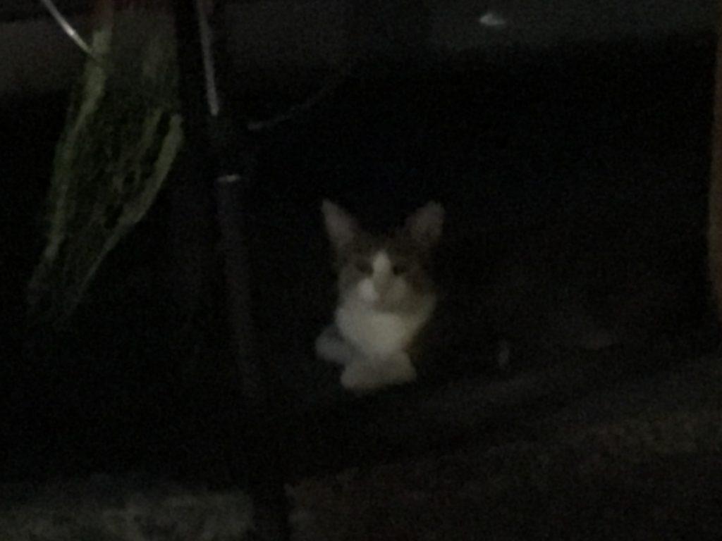 2018-07-26 食コン 待機する猫