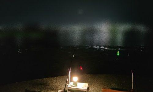 2019-07-29泉佐野食品コンビナート 釣り開始